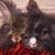 два · прелестный · лев · голову · кролик · древесины - Сток-фото © feedough