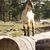 kecske · mező · fű · áll · fa · föld - stock fotó © feelphotoart