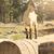 kecske · természet · áll · fa · kicsi · baba - stock fotó © feelphotoart