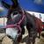 donkey close up in a farmland stock photo © fernando_cortes