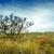 aquecimento · global · solitário · areia · pôr · do · sol · deserto · dramático - foto stock © fesus