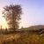 nascer · do · sol · árvore · isolado · 3d · render · praia - foto stock © fesus