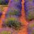 Landschaft · Blüte · Fuchs · Baum · Wolken - stock foto © fesus