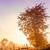 najaar · mistig · ochtend · berg · vallei - stockfoto © fesus