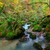 enseada · profundo · montanha · floresta · primavera · verde - foto stock © fesus