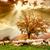Schafe · Baum · Herbst · Landschaft · Natur - stock foto © fesus