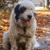 kutyák · őr · birka · hegy · testtartás · kutya - stock fotó © fesus