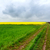 dirt road and canola fields stock photo © fesus