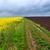granja · camino · de · tierra · amarillo · flor · campos · cielo - foto stock © fesus