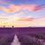 campo · de · lavanda · verão · pôr · do · sol · paisagem · flor · nuvens - foto stock © fesus