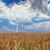 szélturbinák · búzamező · tájkép · természet · technológia · mező - stock fotó © fesus