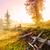 varázslatos · napfelkelte · fa · izolált · 3d · render · fű - stock fotó © fesus