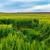 красивой · лет · полях · пшеницы · драматический · небе - Сток-фото © fesus
