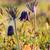 grupy · kwitnąć · łące · kwiaty · wiosną · charakter - zdjęcia stock © fesus