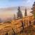 manzara · mistik · sabah · çim - stok fotoğraf © fesus