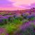 ラベンダー畑 · ハンガリー · 夏 · 花 · 日没 · 自然 - ストックフォト © fesus