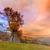 chêne · vert · prairie · ciel · lumière · nuages - photo stock © fesus