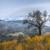 オリーブの木 · 干ばつ · 草原 · 孤独 · 草 · 木材 - ストックフォト © fesus