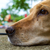 yellow labrador retriever stock photo © fesus