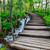 лес · путь · мнение · стране · дороги · зеленый - Сток-фото © fesus