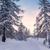 tél · erdő · Alpok · hegyek · Szlovénia · fa - stock fotó © Fesus