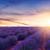 campo · de · lavanda · flores · belleza · verano · campo · verde - foto stock © fesus