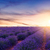 fransız · yeşil · orman · manzara - stok fotoğraf © fesus