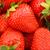fresco · morangos · quadro · completo · maduro · comida · fundo - foto stock © Fesus