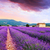 paars · lavendel · zonsondergang · Frankrijk · hemel · achtergrond - stockfoto © fesus