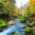 kreek · diep · berg · bos · water · hout - stockfoto © Fesus