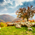 koyun · ağaç · sonbahar · manzara · doğa - stok fotoğraf © fesus