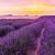 francês · panorâmico · ver · flor · paisagem - foto stock © fesus