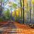 najaar · weg · kleurrijk · loof · bos · boom - stockfoto © fesus
