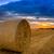 stro · baal · zonsondergang · oogst · hond · land - stockfoto © fesus