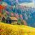 fenséges · ősz · tájkép · fák · napos · hegy - stock fotó © fesus
