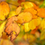 autumn leaves stock photo © fesus