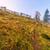 のどかな · ツリー · 風景 · 山 · 農業 - ストックフォト © fesus
