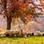 schapen · boom · najaar · landschap · roemeense · natuur - stockfoto © fesus