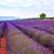ラベンダー畑 · 夏 · 風景 · 空 · ツリー · 雲 - ストックフォト © fesus