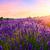 pôr · do · sol · verão · campo · de · lavanda · flor · nuvens · sol - foto stock © fesus