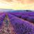 красивой · пейзаж · закат · небе · цветок - Сток-фото © fesus