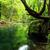 nehir · çağlayan · kayalar · orman · yeşil - stok fotoğraf © fesus