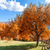autumn tree and green grass on a meadow stock photo © fesus