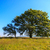 vieux · chêne · vert · prairie · ciel · nuages - photo stock © fesus