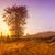 landelijk · berg · landschap · Roemenië - stockfoto © fesus