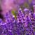 Macaristan · yaz · çiçek · gün · batımı · doğa - stok fotoğraf © fesus