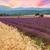 красивой · пейзаж · закат · лаванды · пшеницы - Сток-фото © Fesus