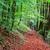 jesienią · lasu · drogowego · czerwony · pozostawia · słońce - zdjęcia stock © fesus