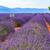 ラベンダー畑 · 夏 · 風景 · 空 · 雲 · 自然 - ストックフォト © Fesus