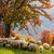 autumn landscape sheep shepard dog stock photo © fesus